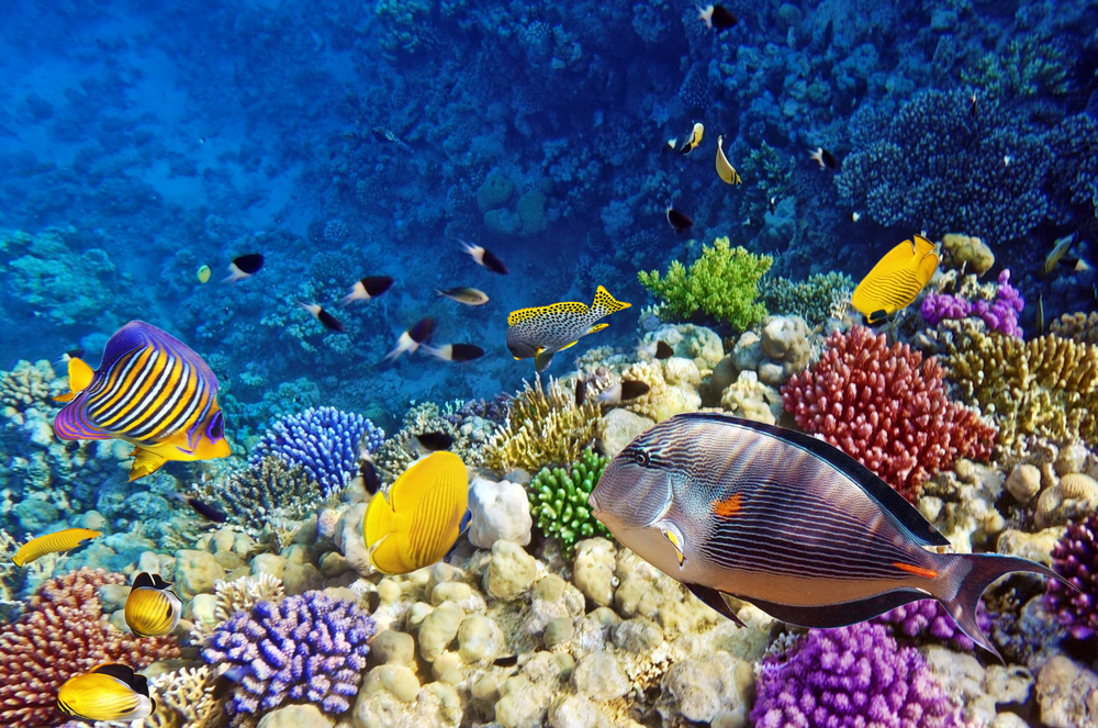 Enjoy A Day Out At Sea Life London Aquarium Park Grand Kensington