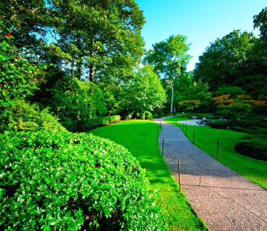 Early morning in Holland Park, London